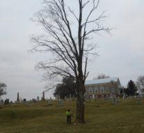 TSI Trees